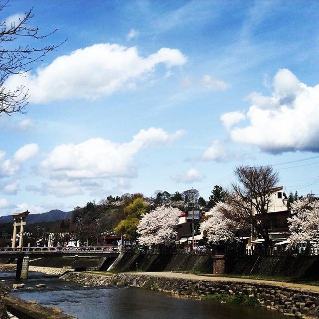 Today's Takayama.There are pink cherry blossom, blue sky, and beautiful festival.#hidatakayama #anchorsite
